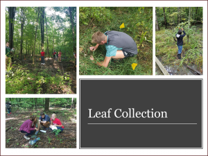 Leaf_Collection