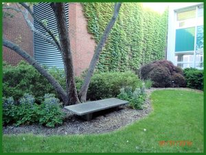 Old Cement Bench in a private alcove ouside Plant Biology, MSU